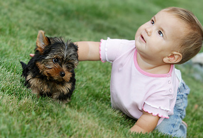 hund katze baby so kommen zwei und vierbeiner. Black Bedroom Furniture Sets. Home Design Ideas