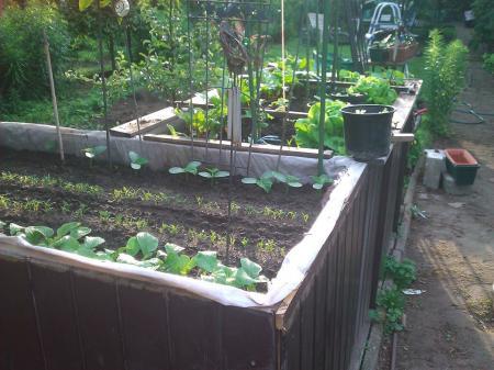 Hochbeet Garten Forum