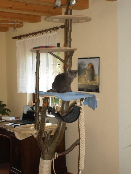 katzenbaum selber bauen haustiere forum. Black Bedroom Furniture Sets. Home Design Ideas